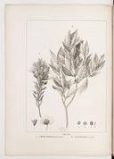 Histoire des plantes les plus remarquables du Brésil   A. de Saint-Hilaire. 1824