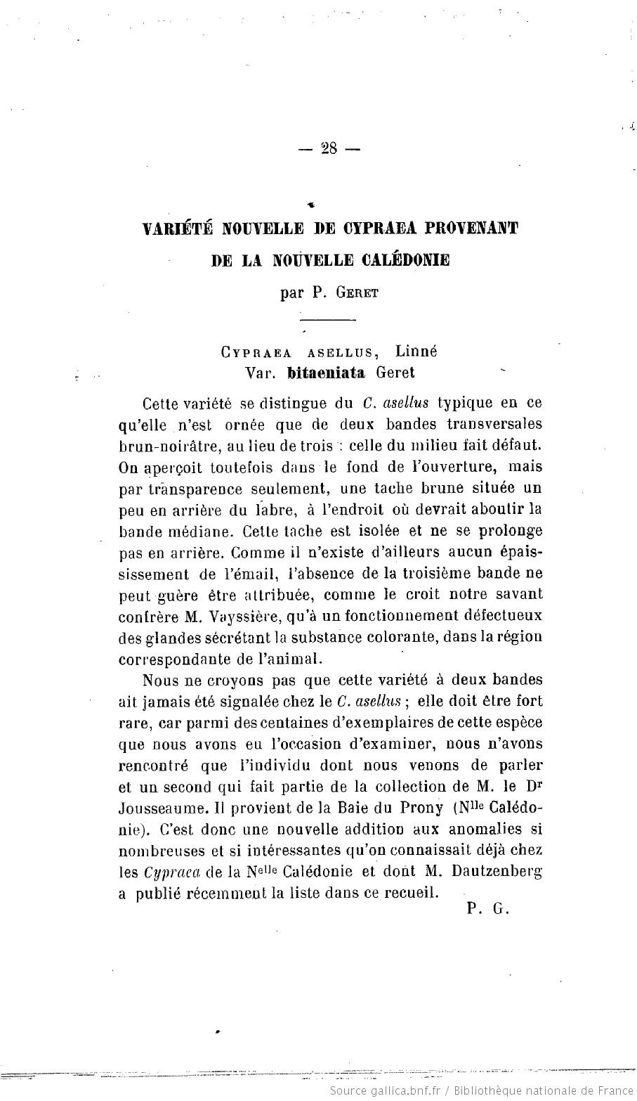Palmadusta asellus bitaeniata - (Geret, 1903) voir Palmadusta asellus asellus - (Linnaeus, 1758) F31