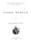 Illustration de la page Méduses provenant de Wikipedia