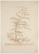 Illustration de la page Gilles Demarteau (1729?-1776) provenant de Wikipedia