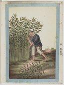 Exploitation du Ma ou chanvre de la Chine <br> Atelier Yoeequa. 1830-1840