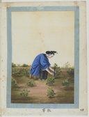 Industrie du coton : culture, récolte, nettoyage, filature, dévidage, tissage <br> Atelier Yoeequa. 1830-1840