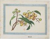 Fruits <br> 1830-1840