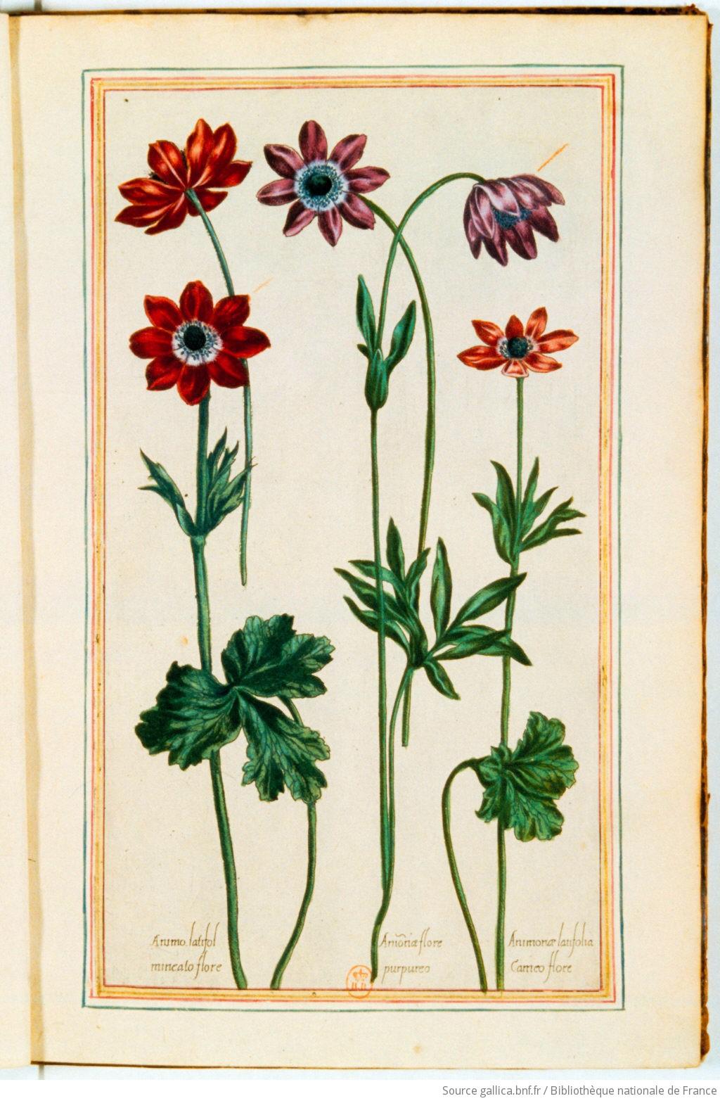 [Illustrations de Le Jardin du très chrestien Henry IV.] / [Non identifié] ; Pierre Valet, aut du texte - 5