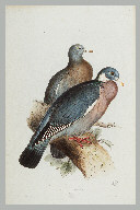 Illustration de la page Edward Lear (1812-1888) provenant de Wikipedia