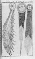 Fig.LXXXI : Comète de 1618 . Fig.LXXXII : Comète de 1652 . Fig.LXXXIII : Comète de 1664 . [Cote :2529A]