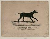 Illustration de la page Philippe Ledieu (1803-18..) provenant de Wikipedia