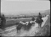 Image from Gallica about Albanais