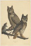 Illustration de la page Ornithologie provenant de Wikipedia
