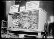Image from Gallica about Aquariums