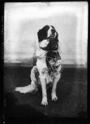 Image from Gallica about Chiots