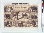 Bildung aus Gallica über Cirque de Montmartre. Paris
