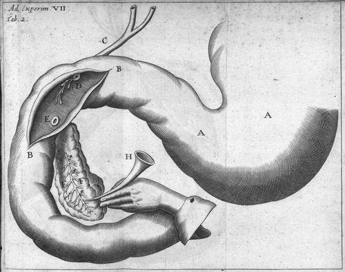 pancreas.jpg