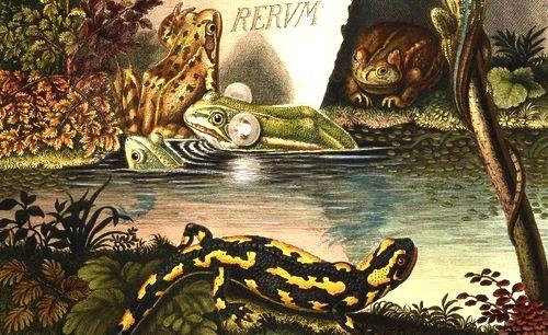 Historia naturalis ranarum nostratium...