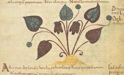 De ponderibus medicinalibus (3r). Pseudo-Hippocrates latinus, Epistola ad Maecenatem (3v-5v). Antonius Musa, Epistola de herba vetonica (19-22v). Pseudo-Apuleius, Herbarius (sive Liber de nominibus et virtutibus herbarum)..., 9e siècle