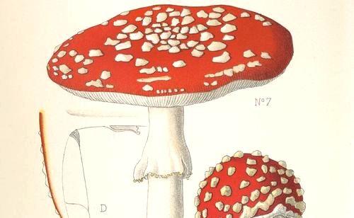 Atlas des champignons de France, Suisse et Belgique