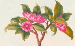 Collection Précieuse et Enluminée des fleurs les plus belles