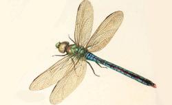 Recueil de fleurs et d'insectes dessinés et peints sur vélin