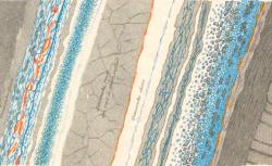 Les pierres : esquisses minéralogiques
