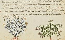 Collectanea medica et collectiones remediorum, Antidotaria, Iatrica, etc. Grec 2183. 15e siècle