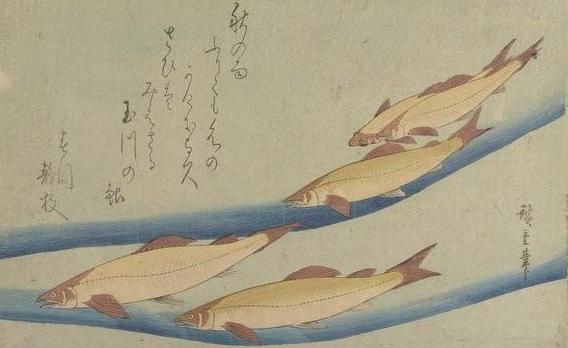 Hiroshige. Les Grands Poissons. 1832 BOITE FOL-DE-10 (2)