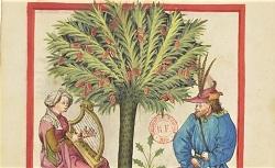 Tacuinum sanitatis. Latin 9333. 15e siècle
