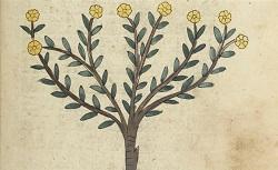 [Ibn Faḍl Allāh al-ʿUmarī, Masālik al-abṣār fī mamālik al-amṣār]. Arabe 2771. 14e siècle