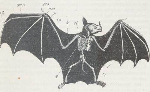 """Accéder à la page """"Milne-Edwards, Alphonse (1835-1900)"""""""