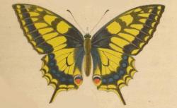 Nouvelle chasse aux papillons
