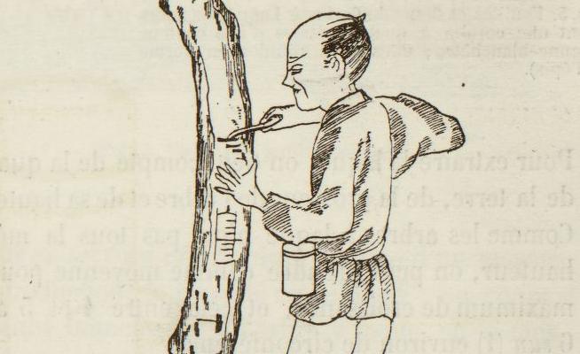 P. Ory. Les procédés industriels des Japonais : l'arbre à laque. 1875. VP 16801. Vue 12
