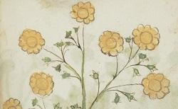 Liber plantis. Hébreu 1199. Vers 1500