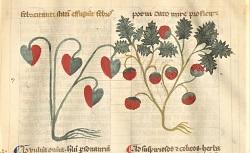 Liber quatuor tractatuum. Arsenal Ms 1031. 14e siècle