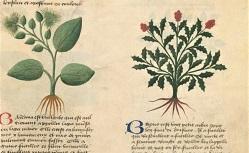 Livre des simples médecines. Français 623. 15e siècle