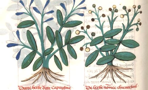 PLATEARIUS, « Livre des symples medichinos, autrement dit Arboriste, continué selon le A, B, C. ».
