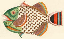 Louis Renard, Poissons, écrevisses et crabes de diverses couleurs et figures extraordinaires
