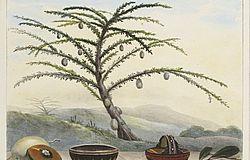 Voyage pittoresque et historique au Brésil, ou Séjour d'un artiste français au Brésil, depuis 1816 jusqu'en 1831 inclusivement