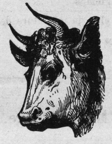 Le Bœuf gras. Image publiée à Charquemont le 25 janvier 1891 dans le journal : Le Publicateur des montagnes du Doubs