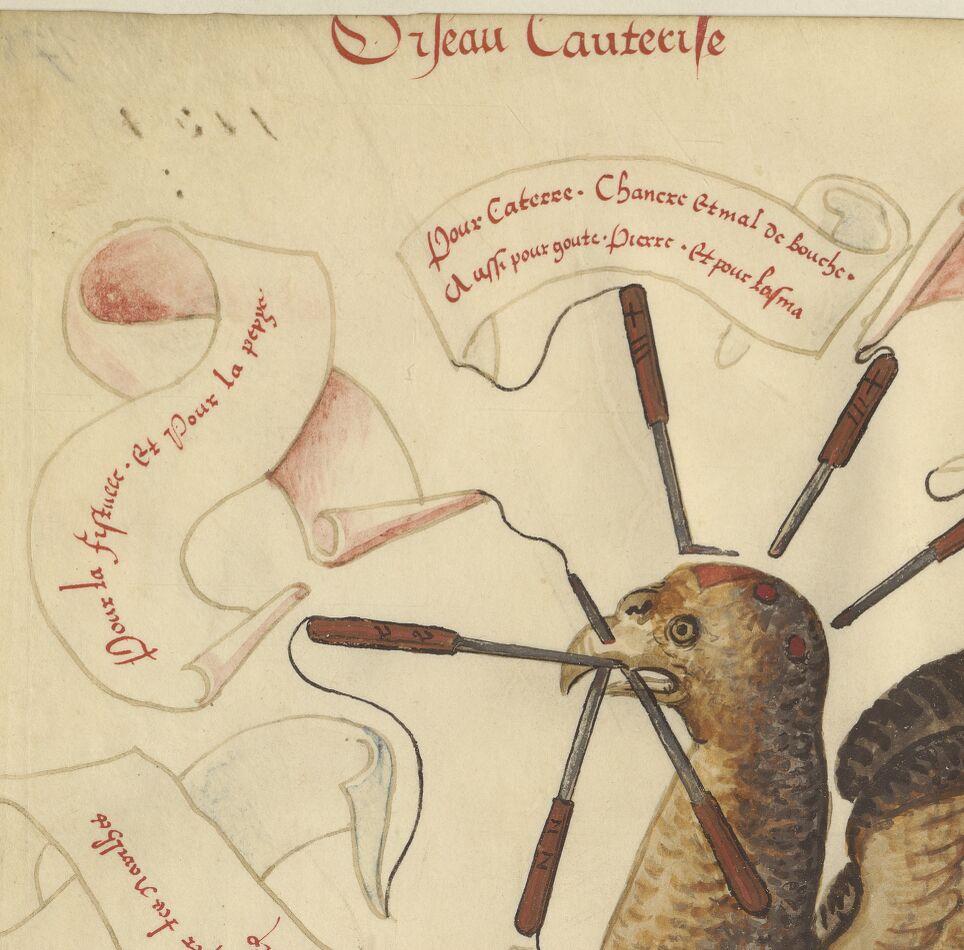 « Livre des oiseaulx de proye, tant en l'art d'esperverie, aultrusserie que faulconnerie »