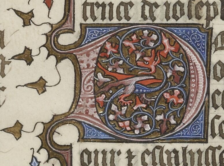 Foliated D with dragon